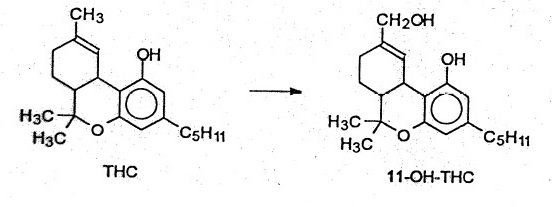 THC to 11-OH-THC metabolism