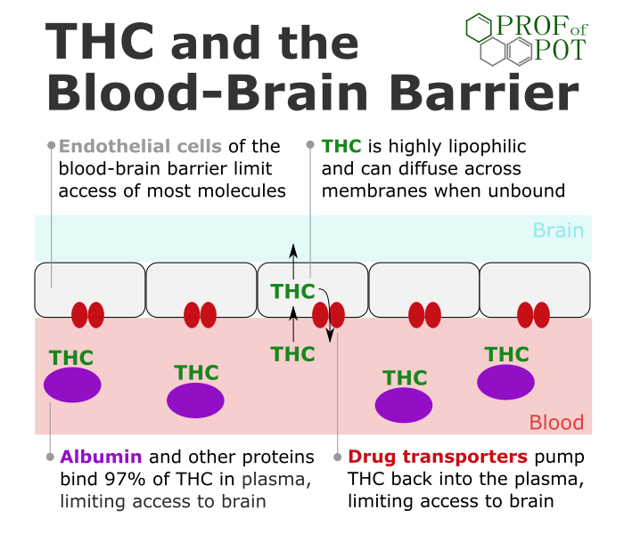 THC and the blood-brain barrier