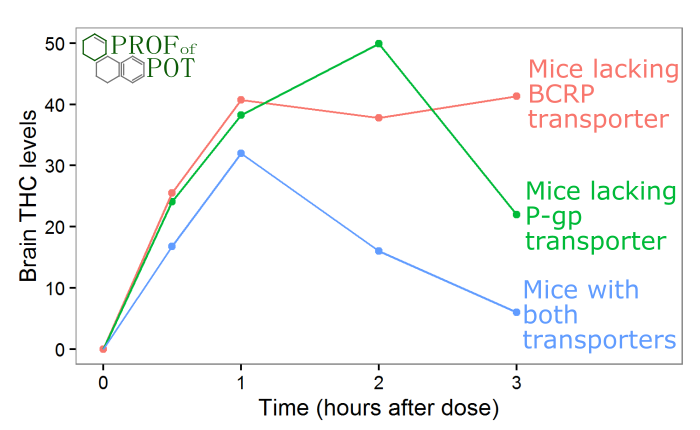 Brain THC levels in mice lacking P-gp or BCRP drug transporters