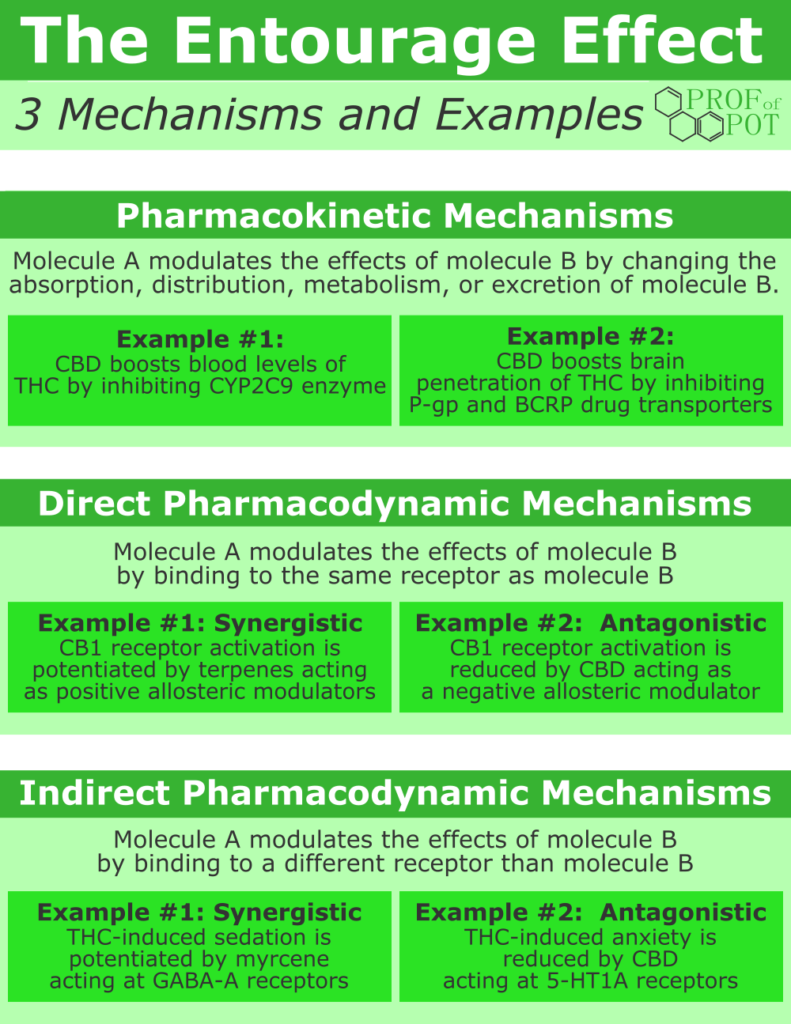 Infographic: 3 mechanisms of the cannabis entourage effect - pharmacokinetic, direct pharmacodynamic and indirect pharmacodynamic.